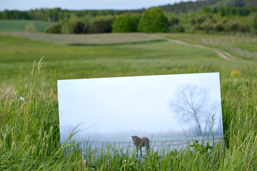 Here I stand (The Magic Has Arrived), fotografia pod szkłem akrylowym 105 cm x 70 cm